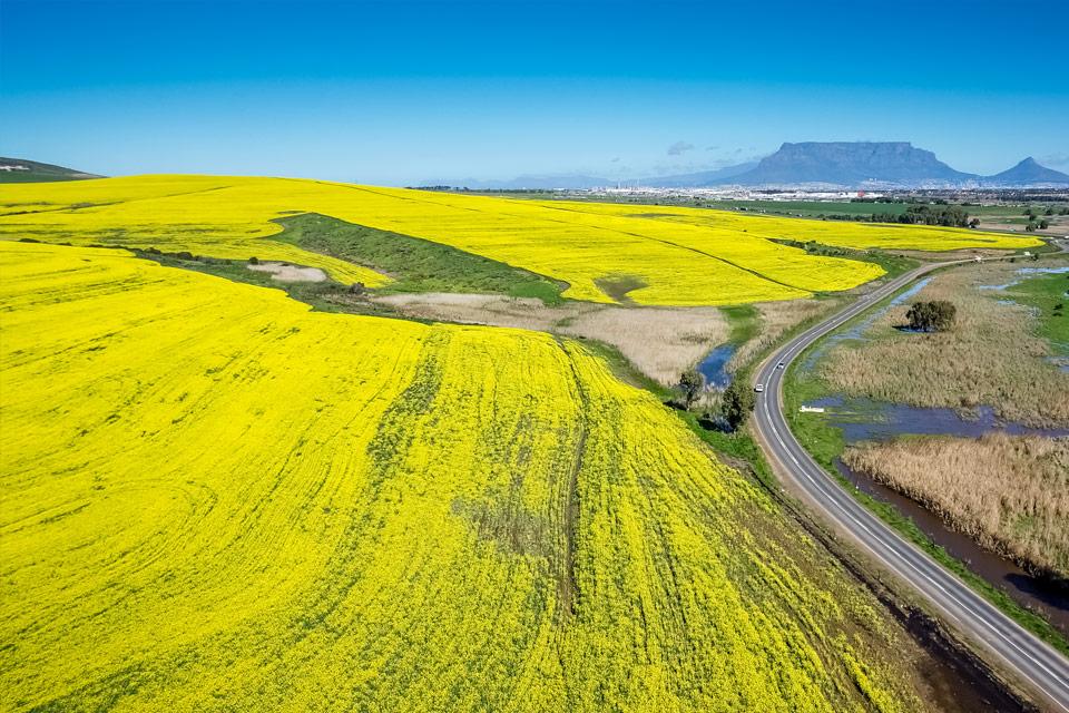 Australian Oilseeds Federation